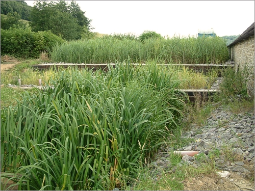 Reed Beds Effluent And Waste Water Treatment Do I Have