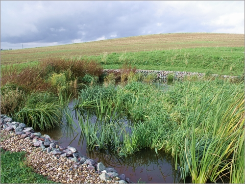 Reed Beds Effluent And Waste Water Treatment Are There